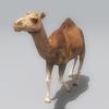 01 31 12 454 camel 05 4