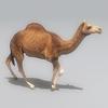 01 31 12 46 camel 01 4