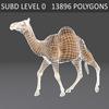 01 31 12 535 camel 06 4
