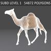 01 31 12 612 camel 07 4