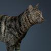 01 31 13 869 cat 01 0007 4