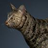 01 31 13 958 cat 01 0008 4