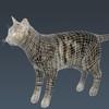 01 31 14 461 cat wireframe 4