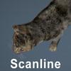 01 31 14 974 cat hair 06 4