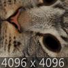 01 31 15 964 cat texture 4