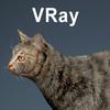 01 31 16 573 cat vray 03 4