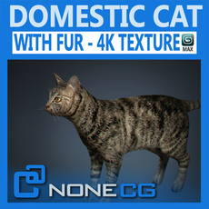 Domestic Cat with Fur 3D Model