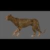 01 31 17 376 cheetah 03 4