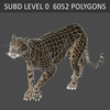 01 31 17 553 cheetah 04 4