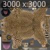 01 31 17 649 cheetah 08 4
