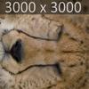 01 31 17 796 cheetah 09 4