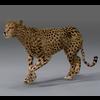 01 31 18 343 cheetah 01 4