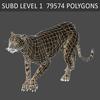 01 31 18 591 cheetah 05 4