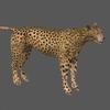01 31 18 83 cheetah 11 4