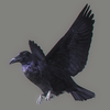 01 31 19 842 crow 01 4