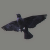 01 31 20 102 crow 04 4