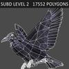 01 31 20 307 crow 07 4