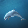 01 31 27 360 dolphin 02 4