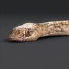 01 31 30 512 snake 011 4