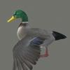 01 31 32 581 duck 08 4
