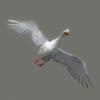 01 31 34 283 duck white 07 4