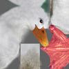01 31 34 469 duck white 08 4