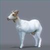 01 31 50 734 goat nofur 0001 4
