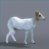 01 31 50 807 goat nofur 0002 4