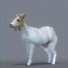 01 31 51 191 goat 0001 4