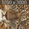 01 32 37 283 leopard 03 4