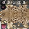 01 32 37 437 leopard 04 4