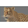01 32 38 614 leopard new 01 4