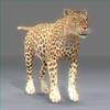 01 32 38 672 leopard new 02 4