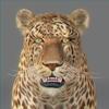 01 32 38 714 leopard new 03 4