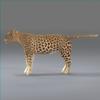 01 32 38 756 leopard new 04 4