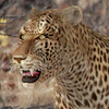 01 32 39 251 leopard 02 4