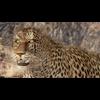 01 32 40 291 leopard hd 01 4