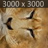 01 33 23 607 lion 08 4