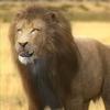 01 33 23 966 lion 01 4
