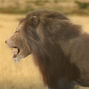 01 33 24 37 lion 02 4