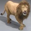 01 33 25 623 lion 11 4