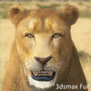 01 33 26 697 lioness 03 4