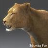 01 33 26 773 lioness 04 4