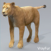 01 33 27 199 lioness 14 4