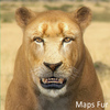 01 33 27 33 lioness 11 4