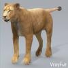 01 33 29 813 lioness 14 4