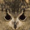 01 33 47 192 owl 0011 4