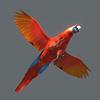 01 33 57 309 parrot2 0005 4