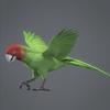 01 33 58 958 parrotwild 02 4