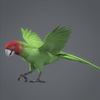 01 34 15 531 parrotwild 02 4